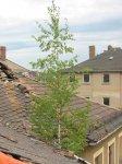 Torgauer Straße 29 - Dach